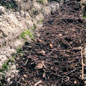 Kompost für die Nährstoffe
