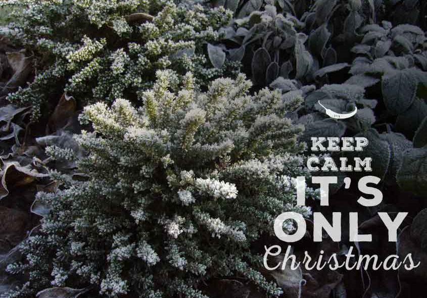 Frohe Weihnachten & eine gute Ernte im Neuen Jahr!